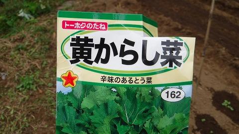 2017.10.14菜園26