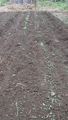 2017.10.19菜園6