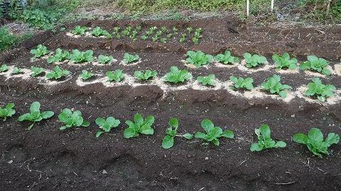 2017.1118菜園40