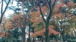大宮公園紅葉