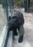 大宮公園熊