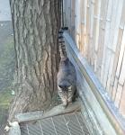 妙福寺猫さん