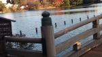 洗足池太鼓橋