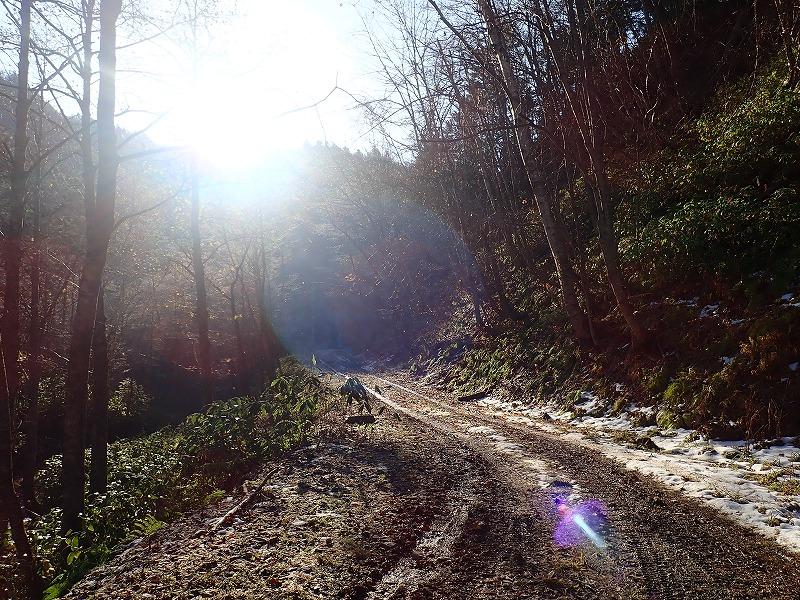 林道の朝日
