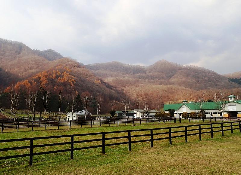 賀張山 牧場