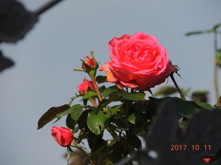 021_201710131819573ac.jpg