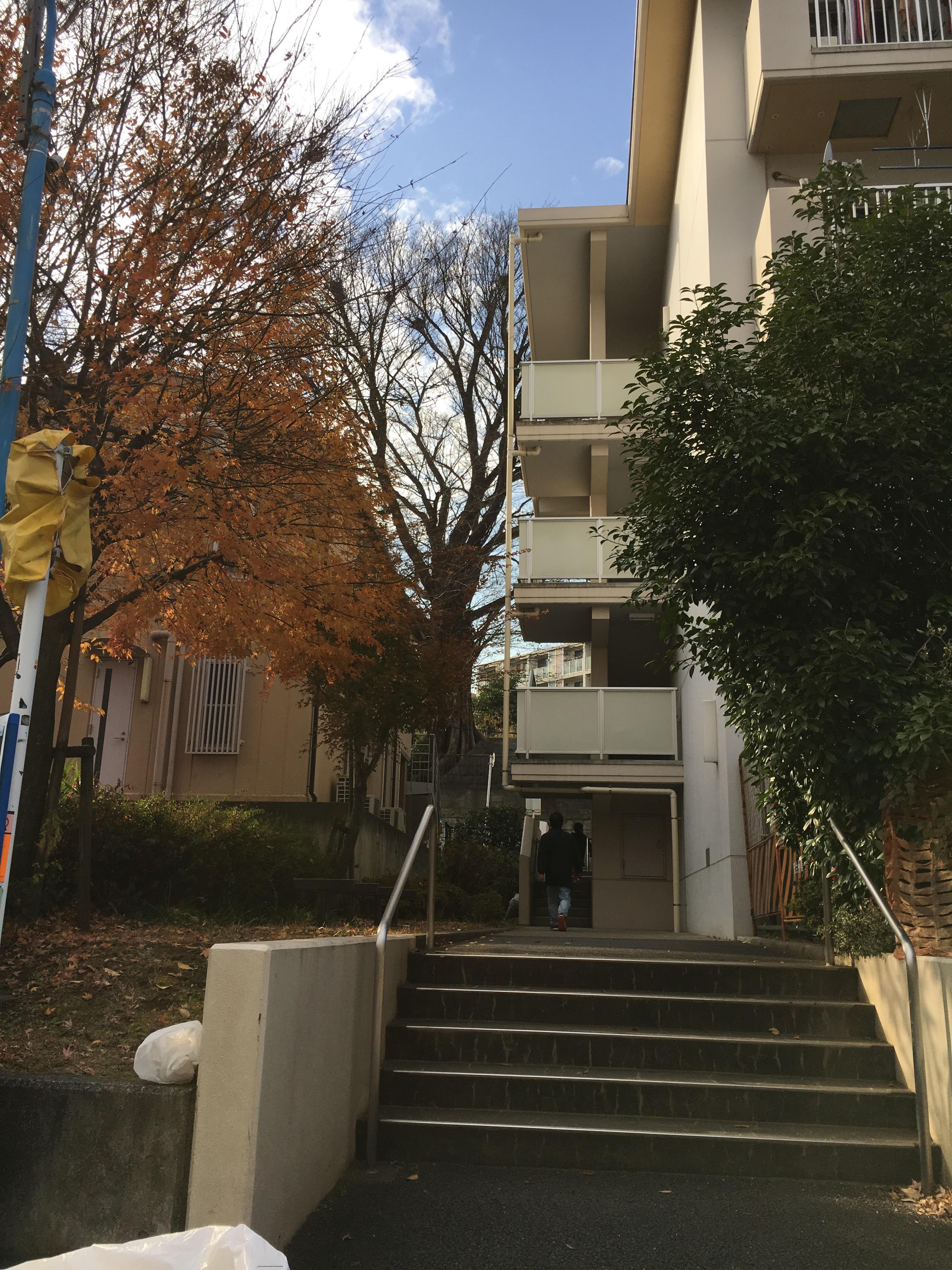 アパートから見た大エノキ