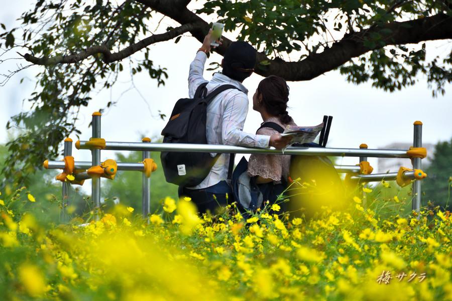 昭和記念公園9変更済