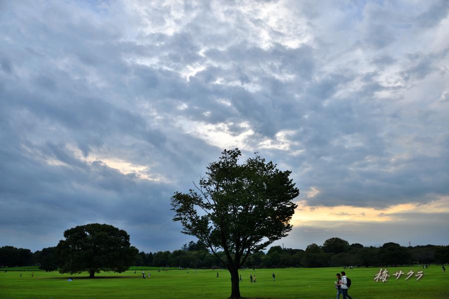 昭和記念公園変更済