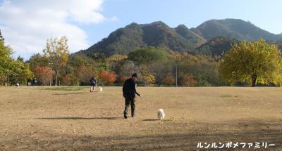 山王山公園 紅葉