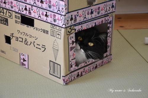 桜子ちゃん♪3075