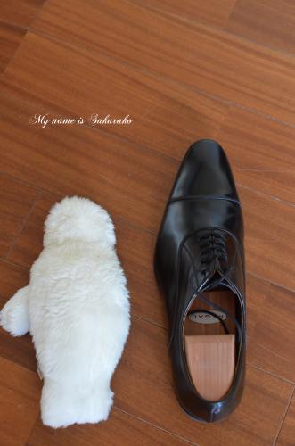 旦那ちゃんの靴②