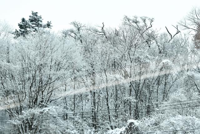 雪景色20171200005