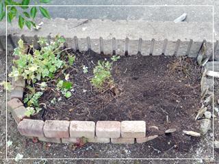 garden2017-98.jpg