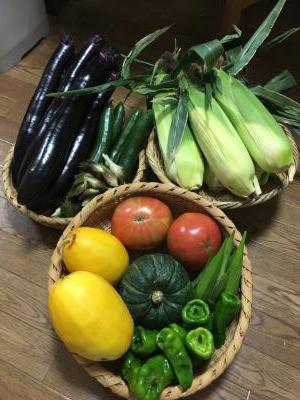 2017.7.26野菜1