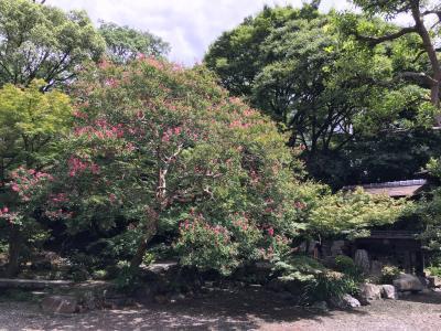 2017.8.13本願寺8