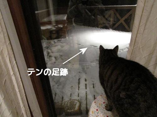 テンちゃん?1