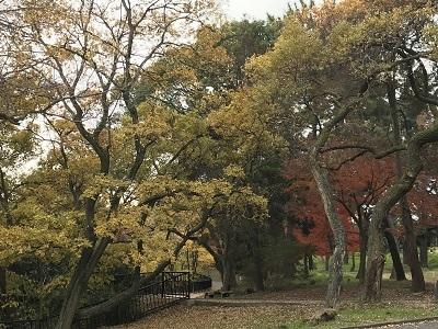 171204緑地公園