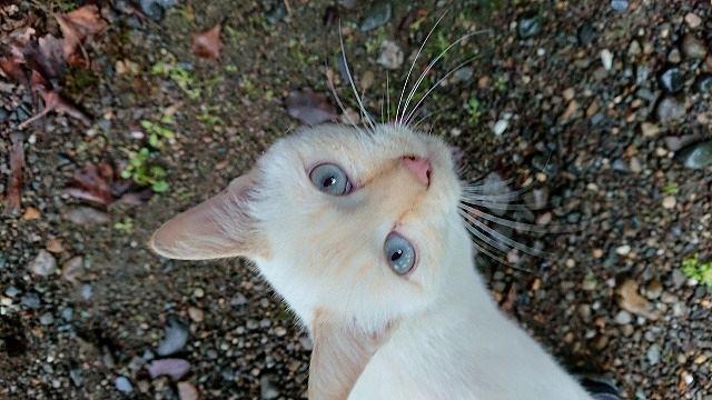 白猫1 ちょび