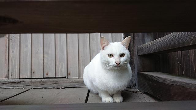 白猫LAST 雄だったのでクリフにします。