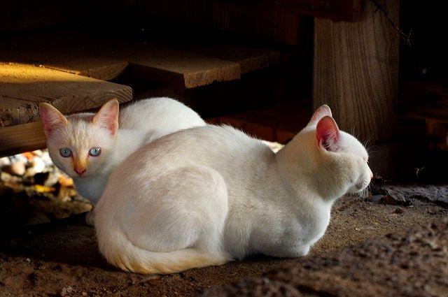 子猫の兄妹 最終章