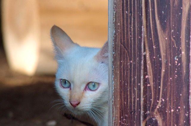 子猫の兄妹その1 ニャンコは見た