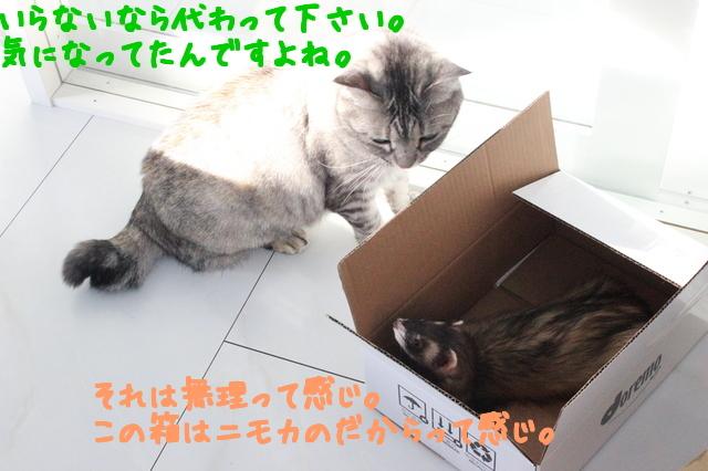 HP4KFVvkRvNq2nw1507459233_1507459320.jpg