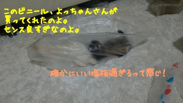 LrqYQiMcP1uMoxe1508996485_1508996566.jpg
