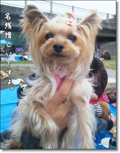 DSC_2038_20171018225043d43.jpg