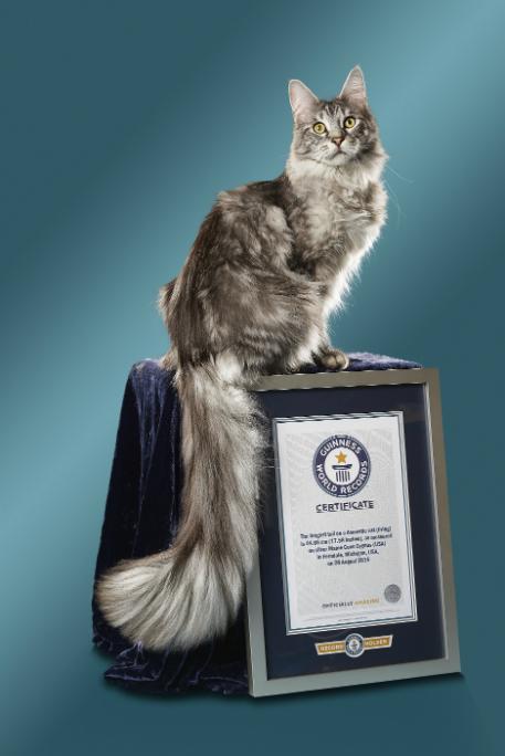 Cygnus - Cat With The Longest Tail_tcm25-487522