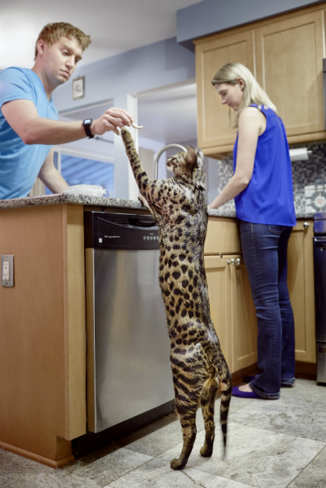 Arcturus_Tallest Cat_3688_tcm25-487520
