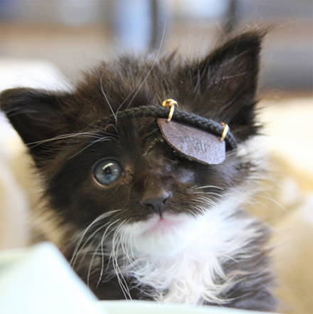 cat_with_the_eyepatch