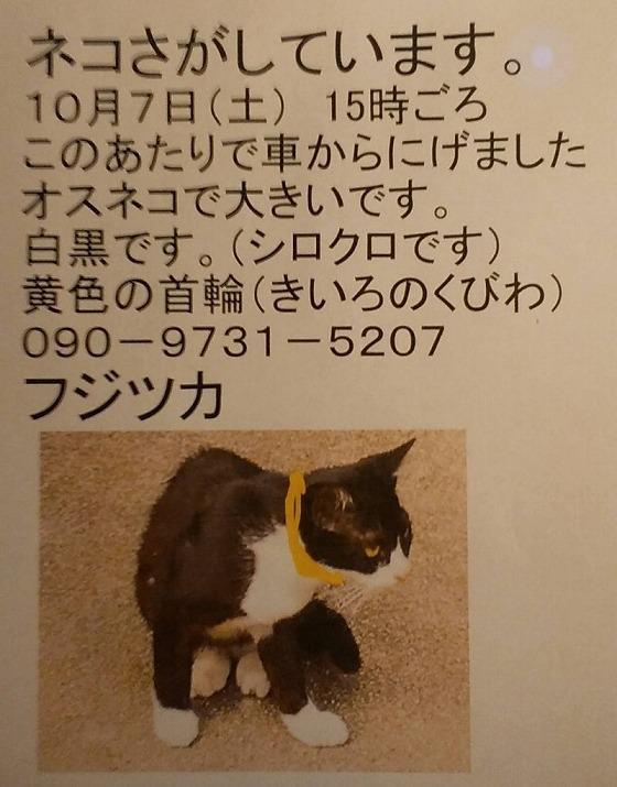 迷子猫 20171009