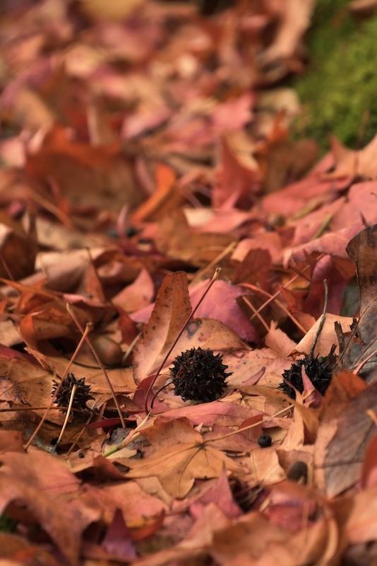 枯れ葉の囁き