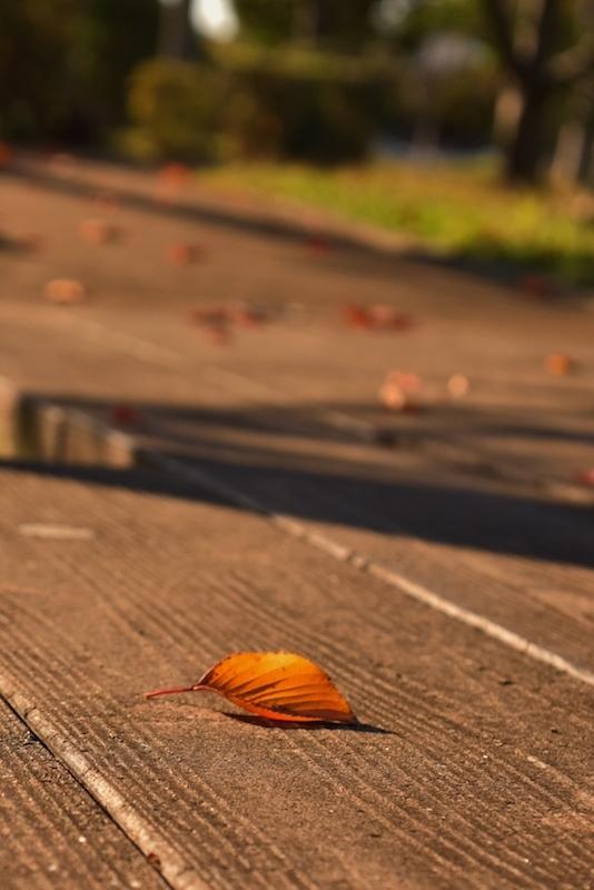 またまた秋色探し