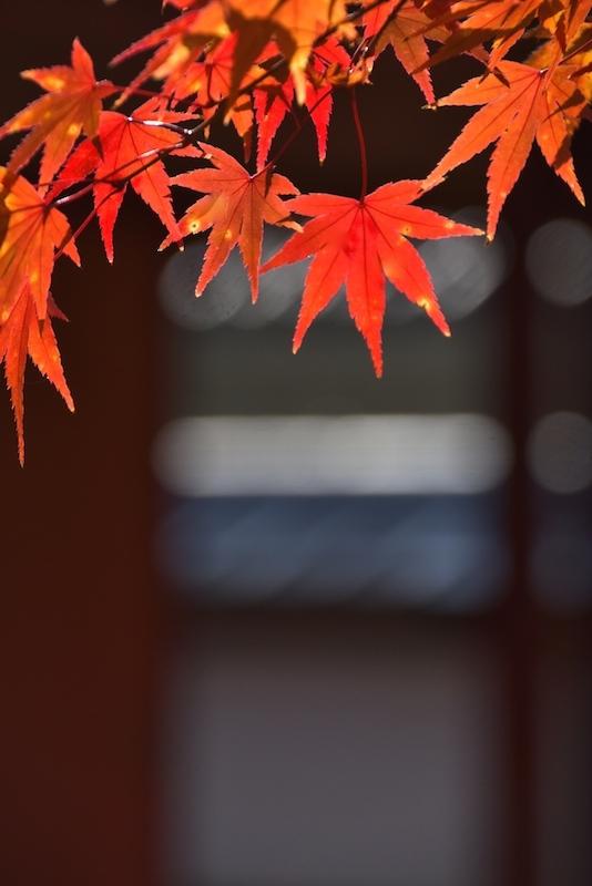 お城下の秋