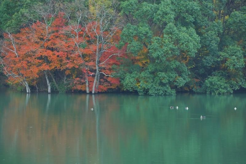 湖畔秋物語り
