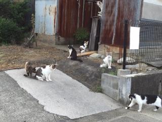 IMG_5724 猫溜り .