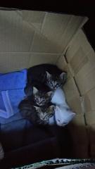 IMG_6116 猫風邪