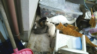 IMG_6117 猫給餌