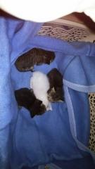 IMG_5935 赤ちゃん猫