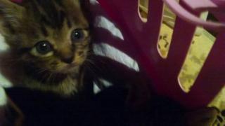 IMG_6091 猫風邪