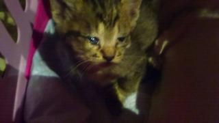IMG_6092 猫風邪