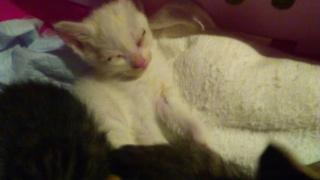 IMG_6093 猫風邪