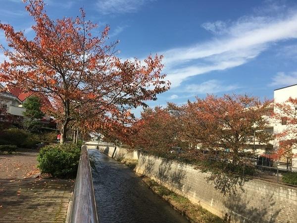 h29,11紅葉の河川敷
