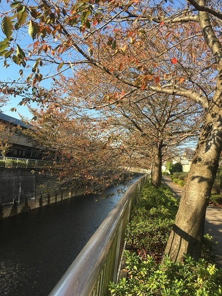 h29,11紅葉の河川敷2