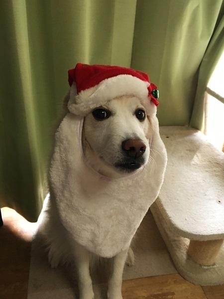 サンタh29,12クリスマスアロー