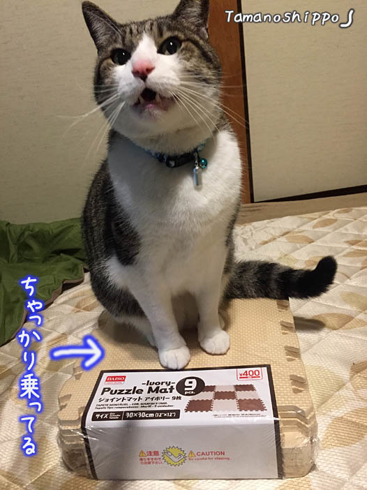 ジョイントマットの上に座る猫(ちび)