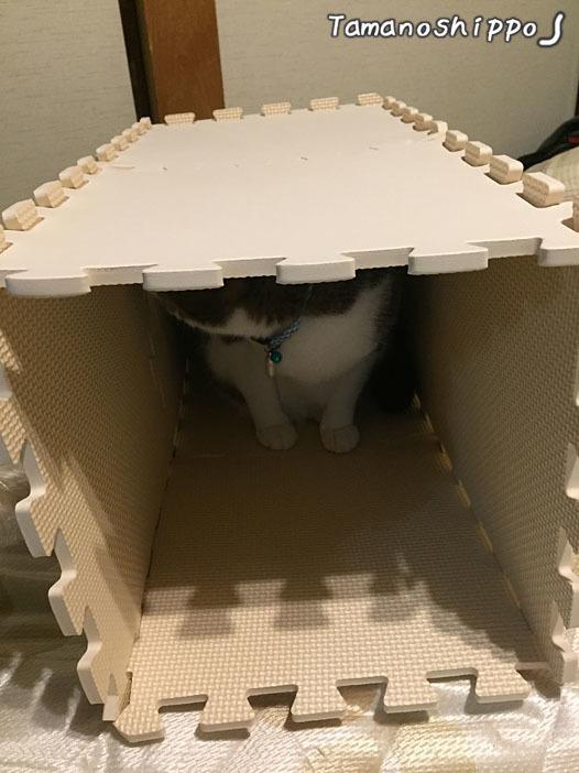 作りかけの爪とぎハウスに入る猫(ちび)