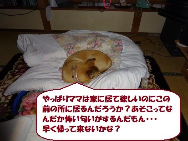 DSC00122_convert_20171216150900_20171217135726c53.jpg